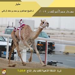 صور سباق اللقايا (الأشواط المفتوحة) مهرجان سمو الأمير المفدى صباح 1-4-2019