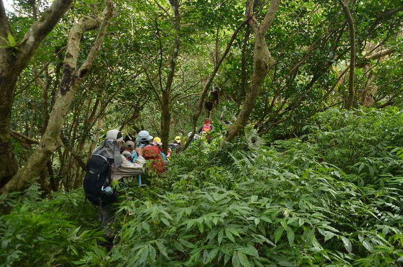 茶留凡山山頂寬稜植被 (2)