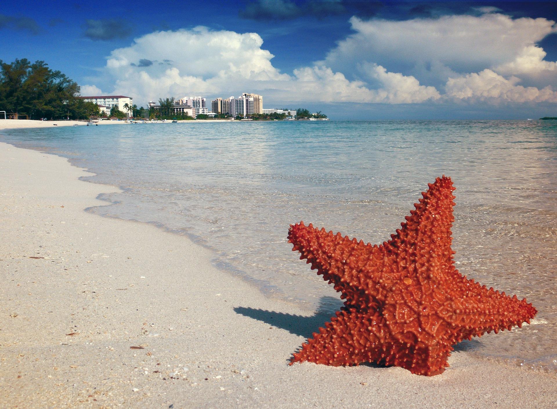 starfish-1122849_1920