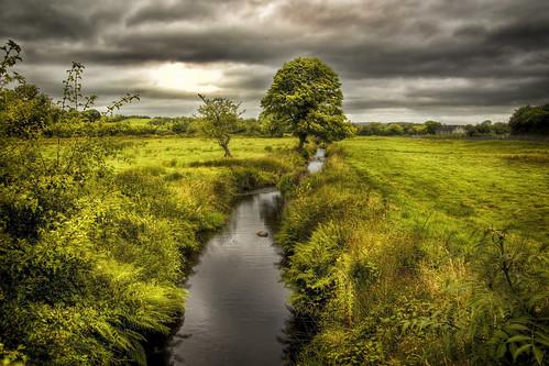 small river big tree
