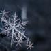 Snow Familiy by Rogg4n