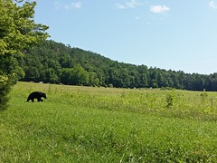 Our Time At the Smoky Mountains