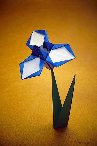 Origami Iris (Jun Maekawa)