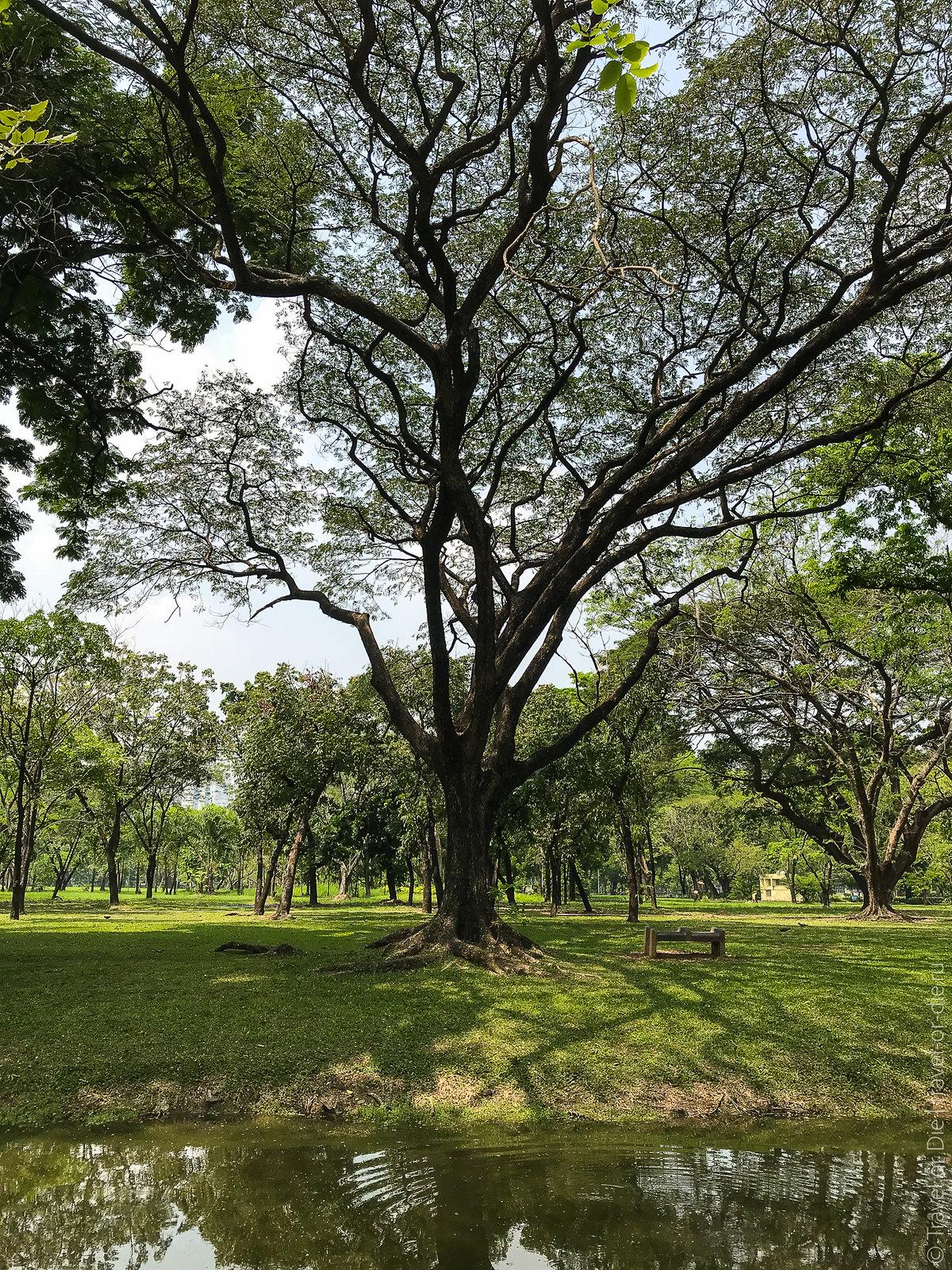 люмпини-парк-lumpini-park-bangkok-9077