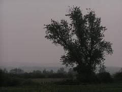 20080515 22971 0905 Jakobus Baum Weite Hügel