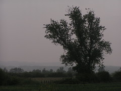 20080515 22971 0905 Jakobus Baum Weite Hügel - Photo of Saint-Sixte