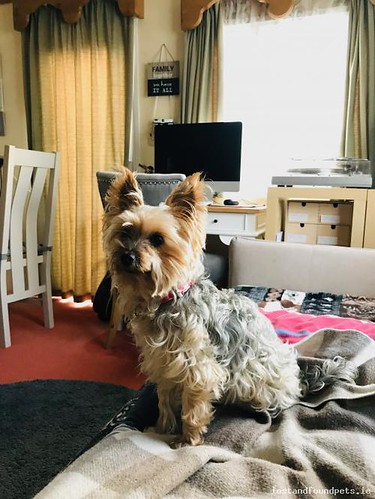 [Reunited] Sun, Dec 30th, 2018 Lost Female Dog - Near Exit 6 On N7, Kill, Kildare