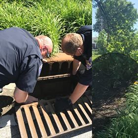 SPD Officers Save Baby Ducks