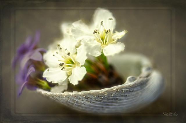 A bowl of Flowers, Nikon D7000, AF-S VR Micro-Nikkor 105mm f/2.8G IF-ED