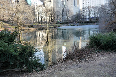 The Pond in February