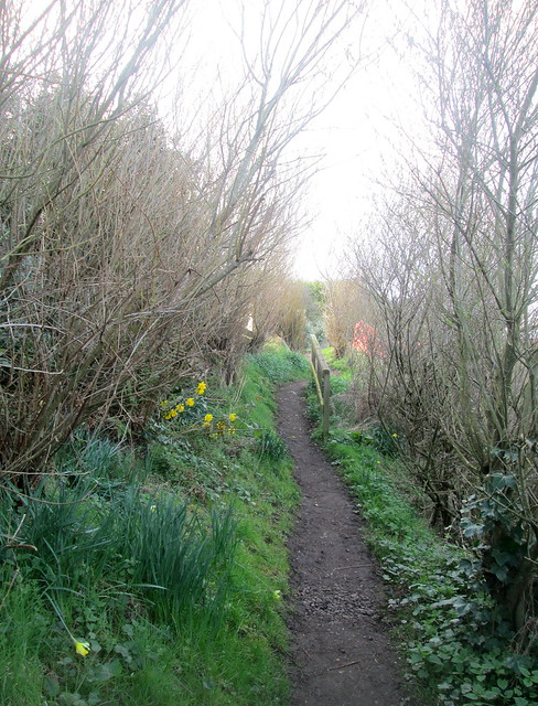 Path , Cockburnspath, Cove, Berwickshire, Scotland