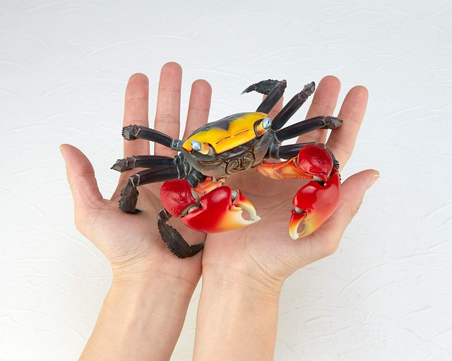 海洋堂 嶄新可動系列《REVO GEO》 第二彈『紅螯螳臂蟹』!リボルテックジオ アカテガニ