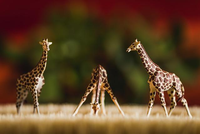 20190302 Serengeti