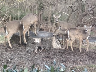 cute deer invasion, photo 1