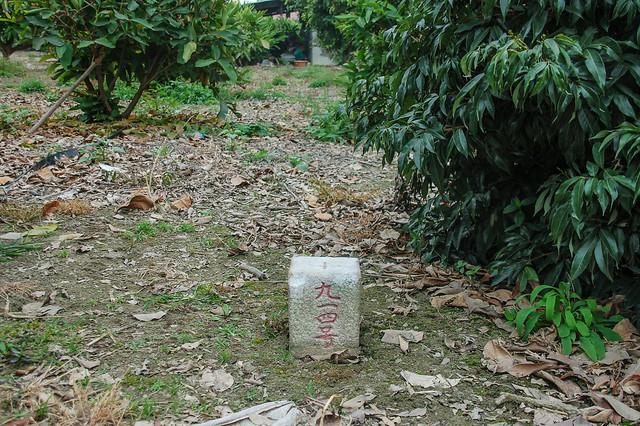 洲子三等三角點(# 914 Elev. 7 m) 1
