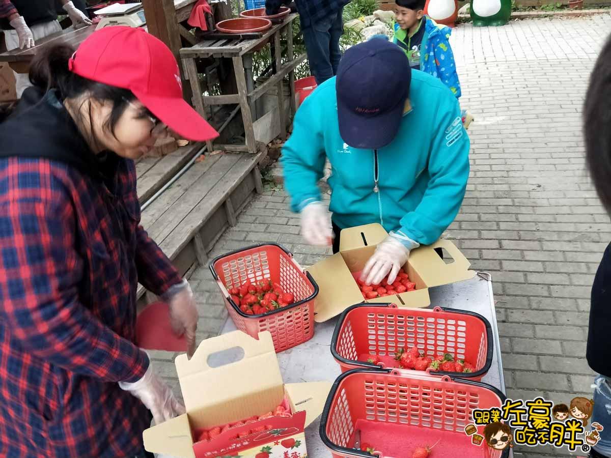 苗栗縣大湖灣潭玫瑰草莓園-34