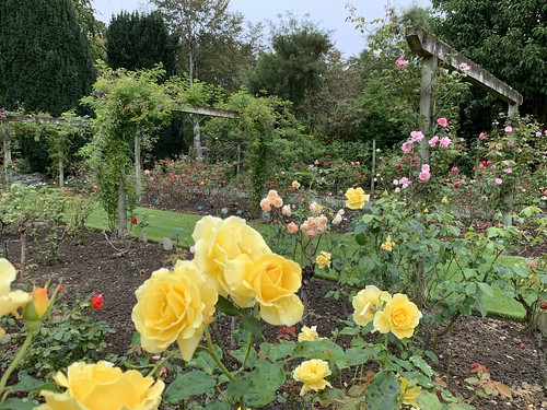 Rose Garden in Queens Park, Invercargill