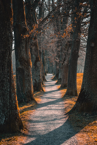 Beautiful walking path in Murnau in autumn light from Toni Hoffmann