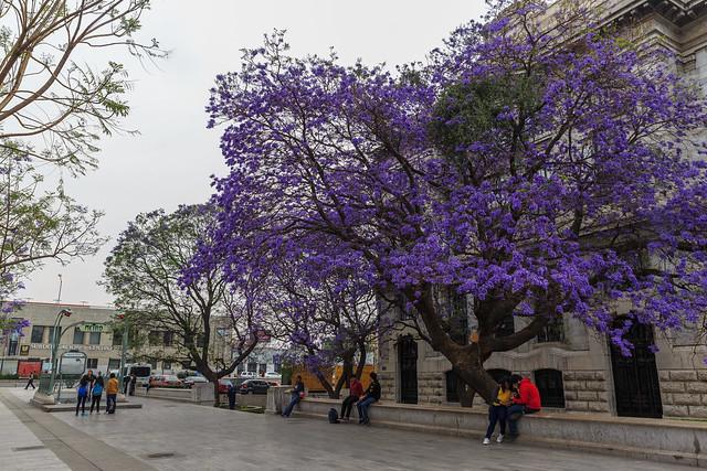 Paseo por la Alameda Central