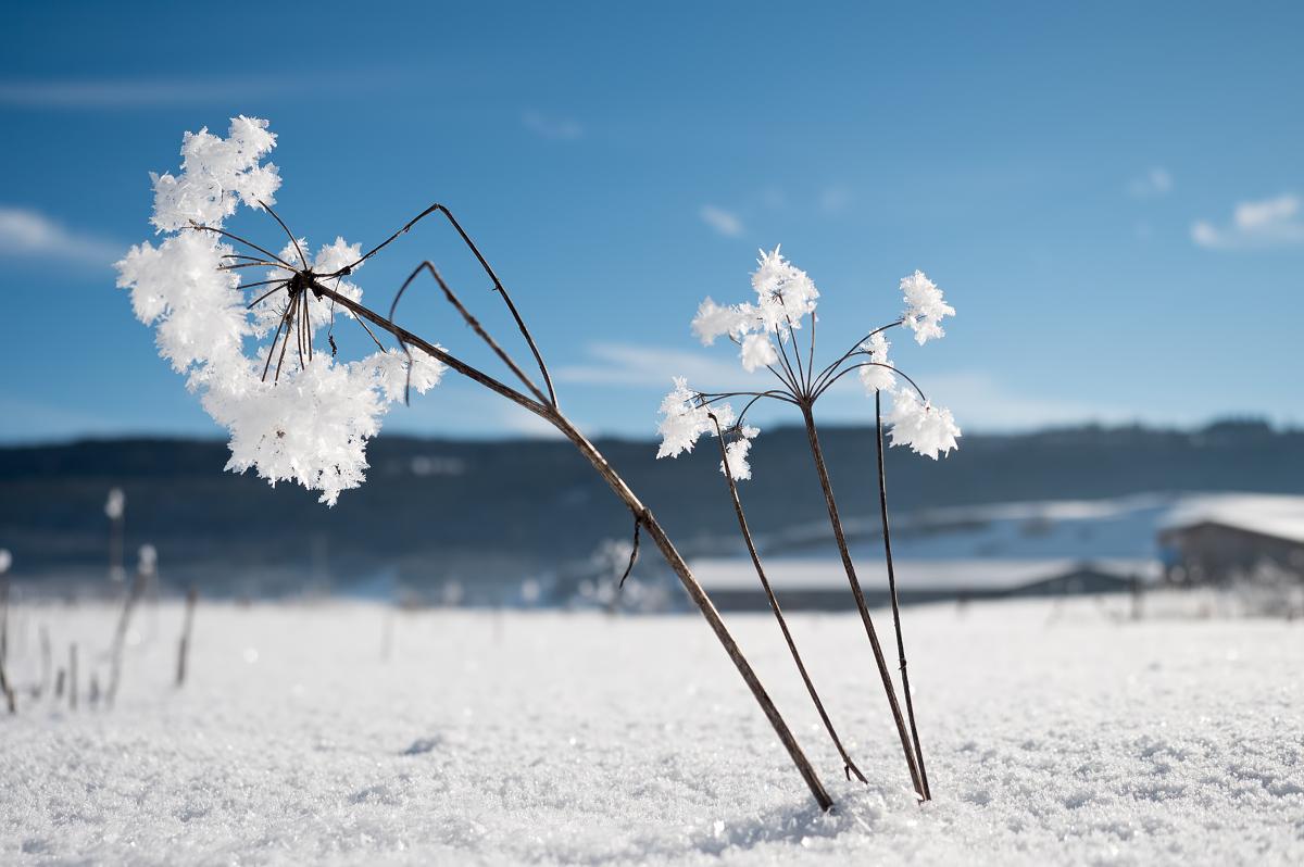 Un peu de neige 39888039453_100f8da289_o