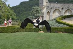 Bald Eagle Showdown - Photo of Marnac