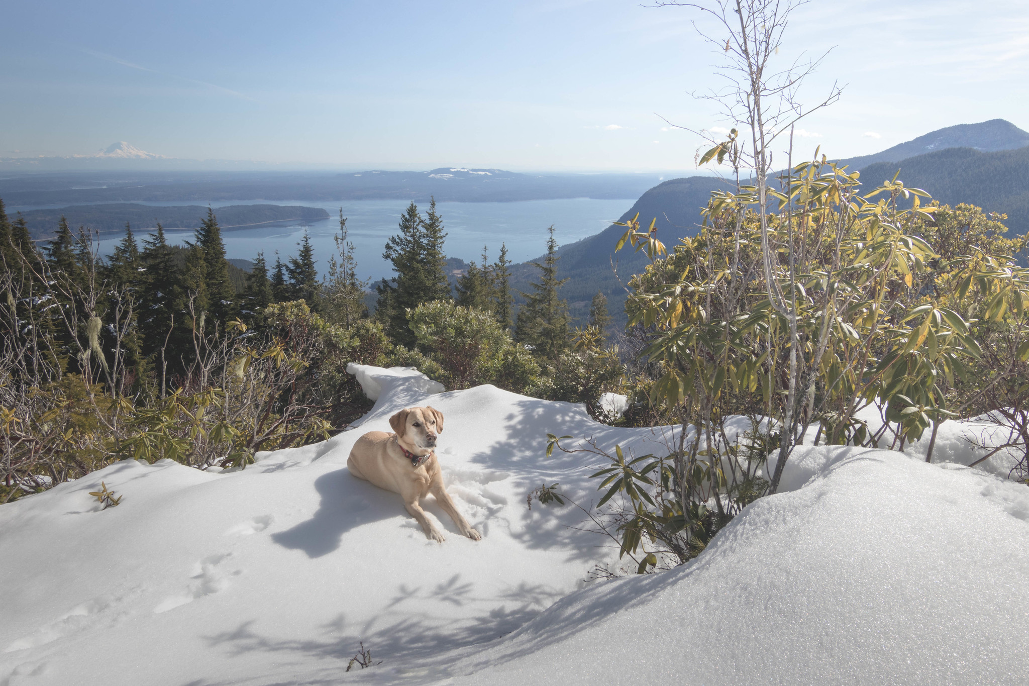 Summit dogs on Mount Walker
