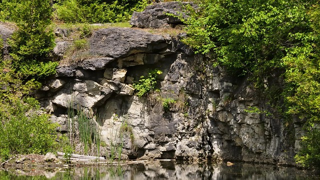 Lockport Silurian Formation limestone face - worked-out quarry, Halton Region forest, Ontario