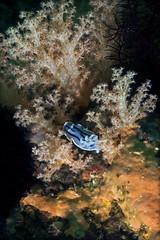 Underwater life of Filippines.