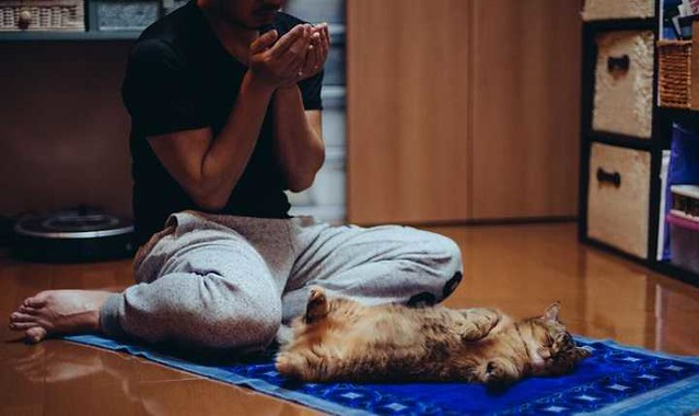 4959 What are the Islamic teachings related to Cats 01