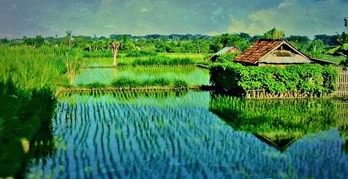 INDONESIEN, Bali , unterwegs zur Sanur Beach, 18044/11286