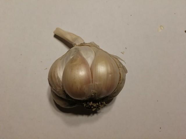 garlic seeds belonging to shiny
