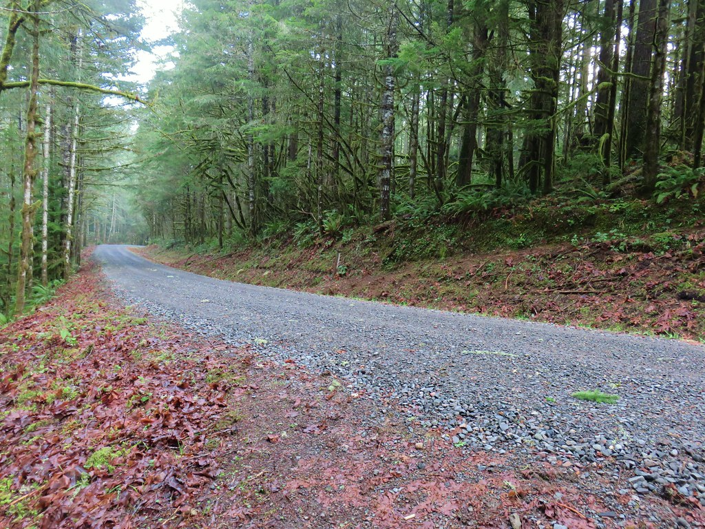 South Willamette Trail crossing Crale Creek Road