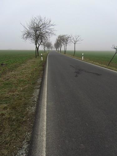 20110316 0203 128 Jakobus Straße Feld Nebel Bäume Allee