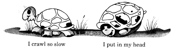 NCERT Solutions for Class 1 English Chapter 16 A Little Turtle 3