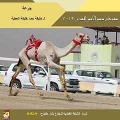 صور سباق الجذاع (الأشواط العامة) مهرجان سمو الأمير المفدى مساء 3-4-