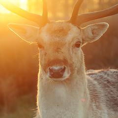 Sun Buck