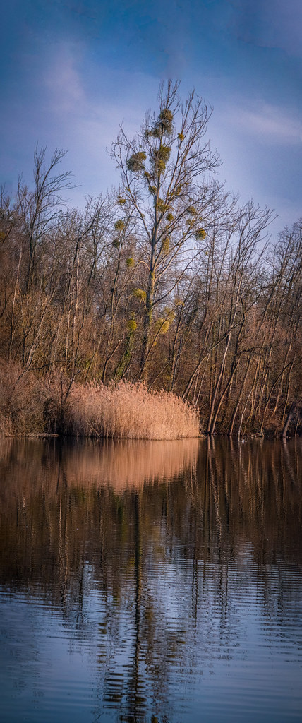 "En attendant le printemps au bord de l'étang... +""recadrage"" 40219576503_418fdbd587_b"