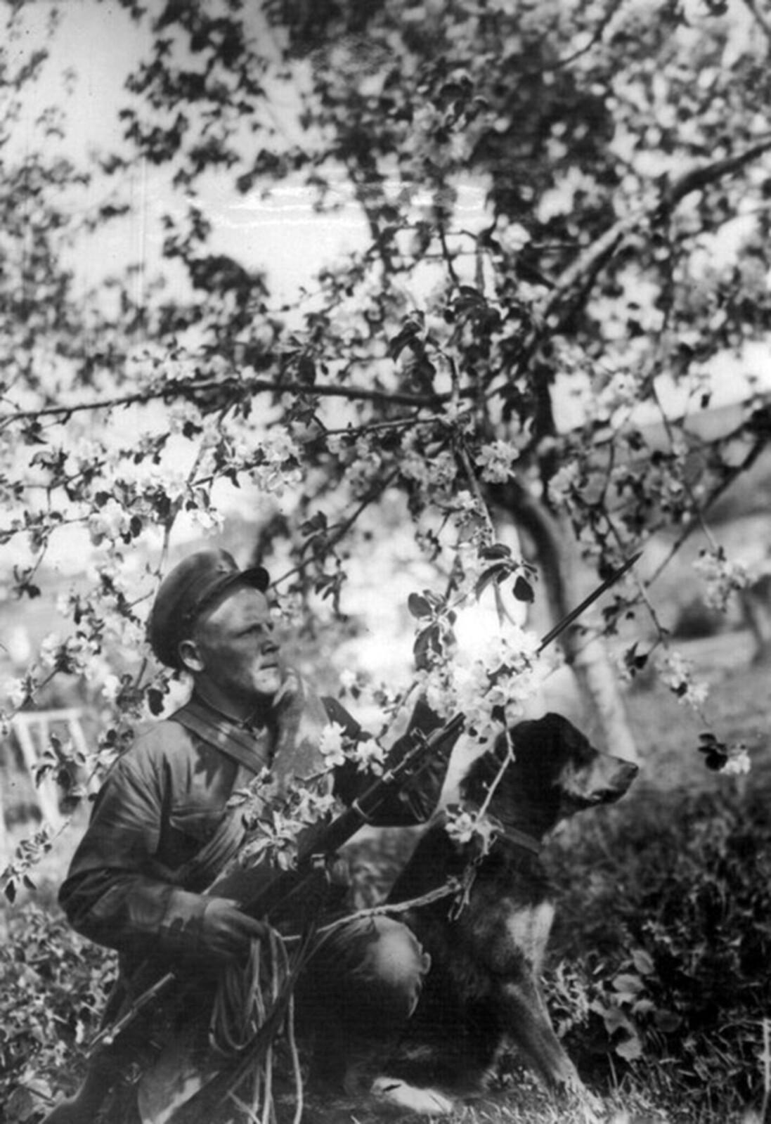 1936. Боец-кинолог N-й пограничной заставы А.А. Сытников с овчаркой Амур в дозоре. Май