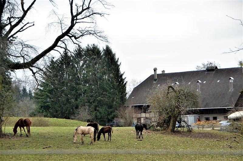 Horses 01.01 (2)