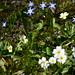Wild Flowers 23.03.2019