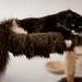 010 - cats cats cats- A9506361