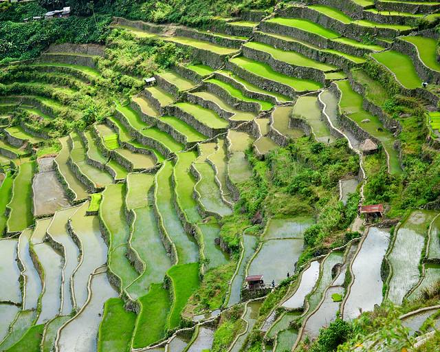 Terrazas de arroz de Batad en Filipinas, patrimonio de la UNESCO