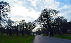 Richmond Park driving through