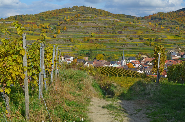 Descending to Bickensohl, Kaiserstuhl, Germany
