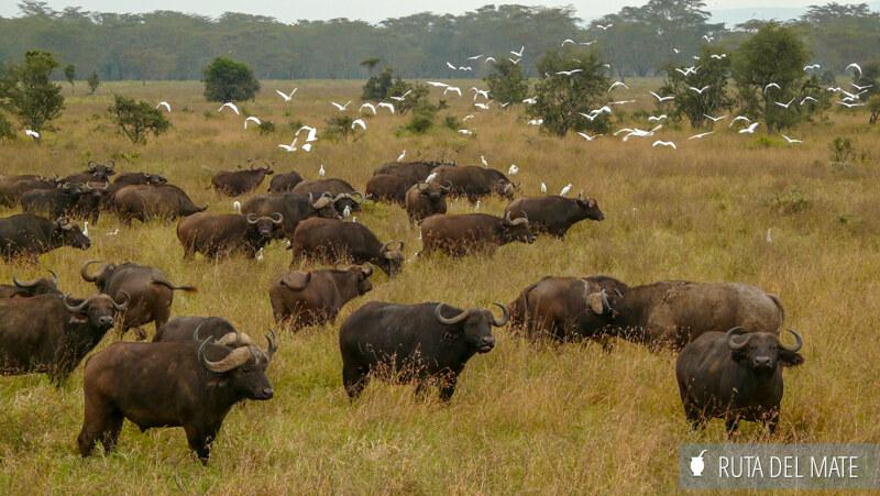 Animales hacer un safari P1130539