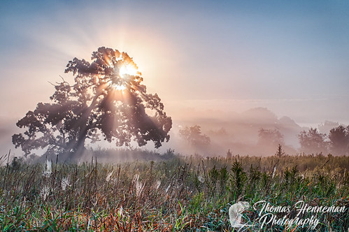 hdr illinois batavia dawn dickyoungforestpreserve field fog gardenspiders green highdynamicrange kanecounty lone lonetree medow mist oak orange prairie ray rays spider spiderweb sun sunray sunrise tree web webs usa grass sky landscape nature natural outdoors