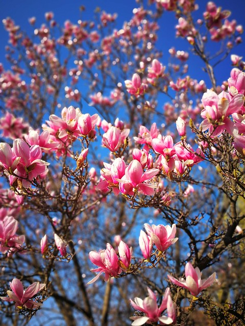 Frühling 😊🌷☀️🌸