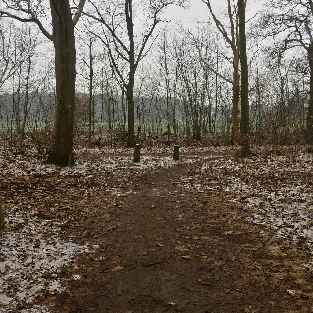 Lichte sneeuwval in het bos