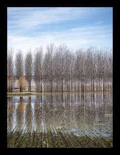 Alrededores de la Laguna del Cañizar