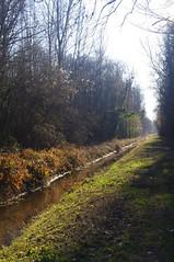 Une forêt éclatante - Photo of Bazoches-lès-Bray
